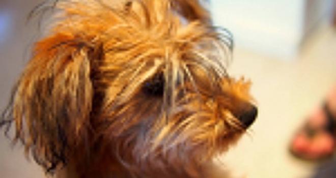 Storia d'amore di un cane maltrattato